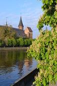 Kenigsberg Cathedral — Stockfoto