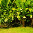 Royalty-Free Stock Photo: Tropical plant garden style