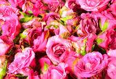 Obrázek růžových růží — Stock fotografie