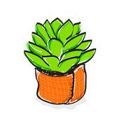 Blossfeldiana handdrawn cartton doodle — Stock Vector