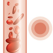 Red blood cells background — Stock Vector