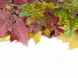 Autumn leaves and acorn with place for your text — Stock Photo