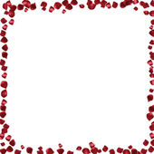 Red petals on a white background. Abstract frame with place for text — Stock Vector
