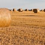 Straw rolls on stubble field — Stock Photo #12456330