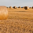 Straw rolls on stubble field — Stock Photo #12456330