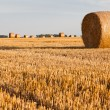 Straw rolls on stubble field — Stock Photo #12456365