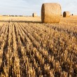 Straw rolls on stubble field — Stock Photo #12456406