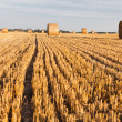 Straw rolls on stubble field — Stock Photo #12456516