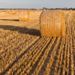 Straw rolls on stubble field — Stock Photo #12456638