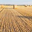 Straw rolls on stubble field — Stock Photo #12456729