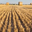 Straw rolls on stubble field — Stock Photo