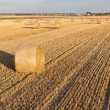 Straw rolls on stubble field - Stock Photo