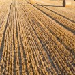 Straw rolls on stubble field — Stock Photo #12456937