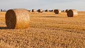 Straw rolls on stubble field — Stock Photo