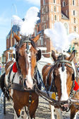 Horses near Mariacki Church. Krakow - Poland — Stock Photo