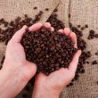 Roasted coffee beans on hands — Stock Photo