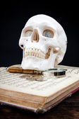 Human scull — Stock Photo