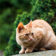 Cat in the garden — Stock Photo