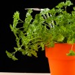 Fresh green plant in a pot — Stock Photo