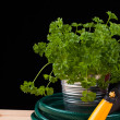 Fresh green plant in a metallic pot and garden hose — Stock Photo