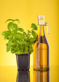 Bottiglie di olio d'oliva — Foto Stock