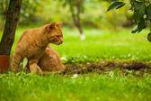 Cat in the garden — Stock Photo