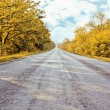 Autumn road going far away — Stock Photo #13313306