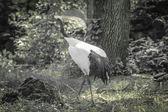 Fauna selvatica — Foto Stock