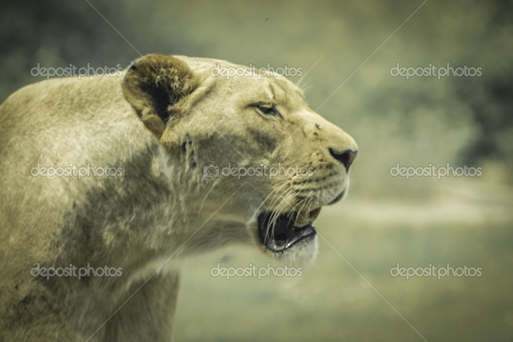Big cats — Stock Photo #13192257