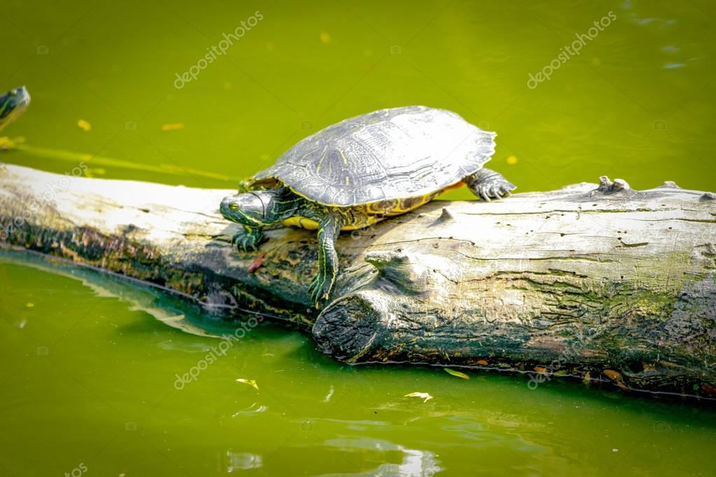 Animals  Stock Photo #13193197