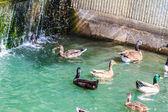 Uccelli in una piscina — Foto Stock