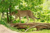 Vida selvagem — Foto Stock