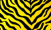 Zebra desen arka plan — Stok fotoğraf