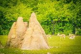 Termite hills — Stock Photo
