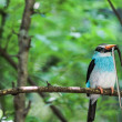 Stock Photo: Kingfisher