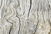 Old wood ash — Stock Photo