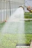 Manual irrigation — Stock Photo