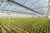 Greenhouse — Stockfoto