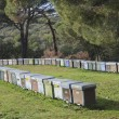Hives — Stock Photo #32861279
