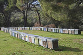 Hives — Stock Photo