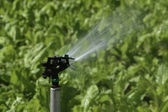 Irrigação — Foto Stock