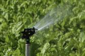 Irrigatie — Stockfoto