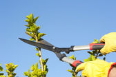 Garden work pruning tree sky background — Stock Photo