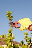 Sfondo cielo di lavori di giardinaggio potatura bush — Foto Stock