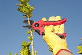 Garden work pruning tree sky background — Stock Photo