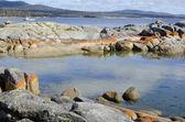 Coast in Tasmania Bay of Fire Australia — Stock Photo