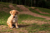 Abandoned puppy — Stock Photo