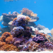 Coral reef — Stock Photo #36024581