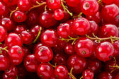 Red Currents (Ribes rubrum) — Stock Photo