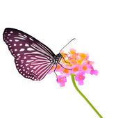 Butterfly on flower — Стоковое фото